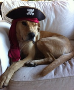 Ronnie the One-Eyed Pirate Dog